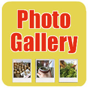 Phot Gallery